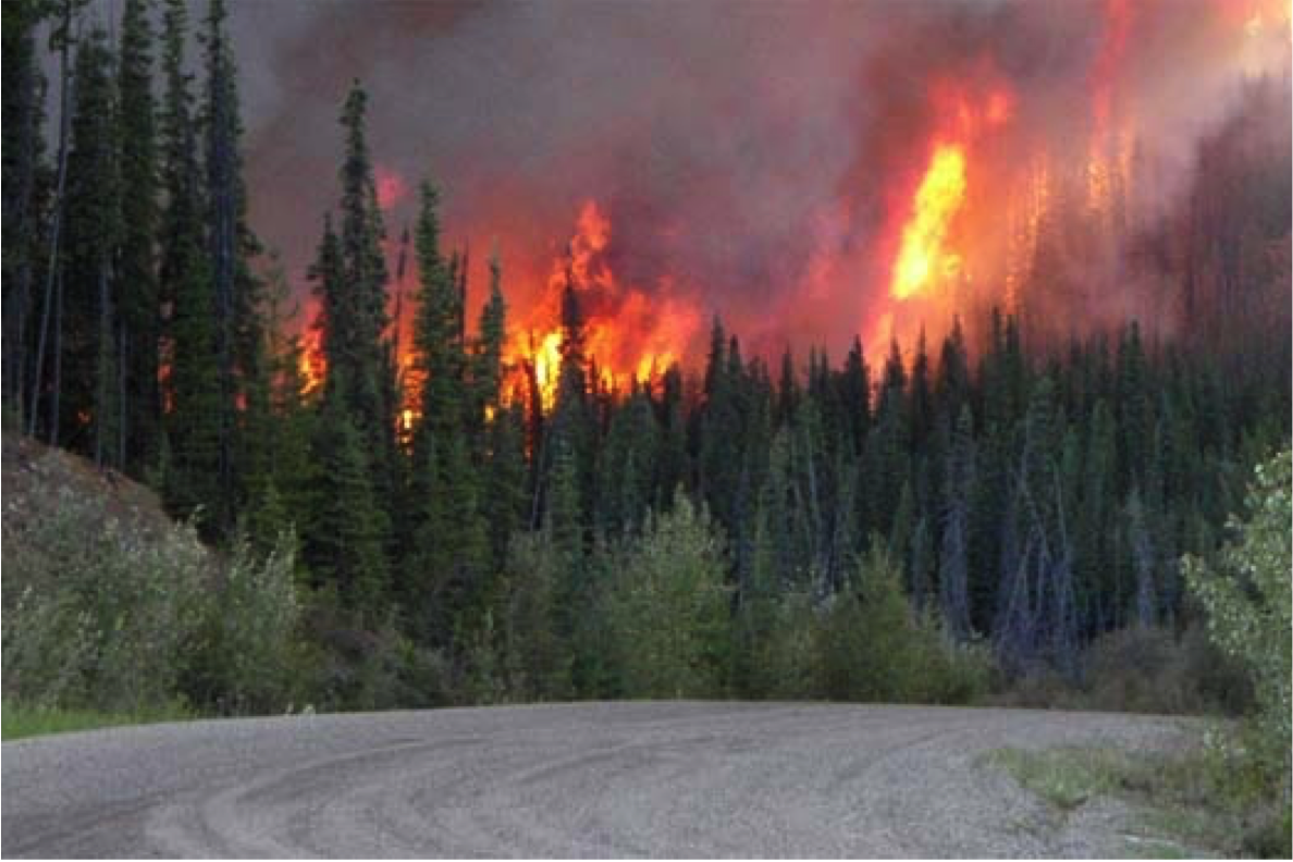 research papers on forest fires Summary: wildfire costs, new development, and rising temperatures april 2016 this summary highlights the major research headwaters economics has conducted concerning controlling fire.